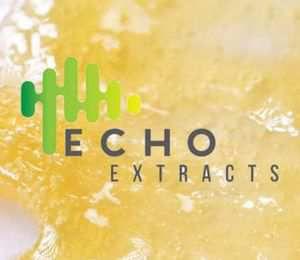 Banana Cream Pie x PinaKoolato   1g   Shatter - ECHO EXTRACTS