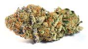 Flower 3.5g -  Cookie Burn at Curaleaf AZ Camelback