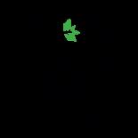 Cactus Breath | 0.5g at Curaleaf AZ Bell